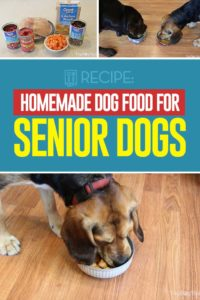Homemade Food for Senior Dogs Recipe