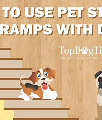 How to Train Dogs to Use Pet Stairs and Ramps