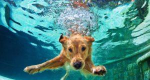 Labrador Retriever Facts You Didn't Know
