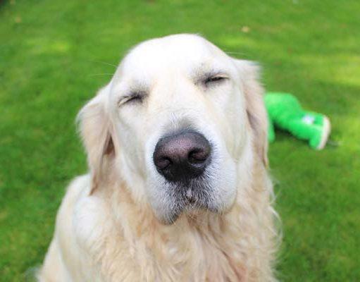 My dog won't open his eyes