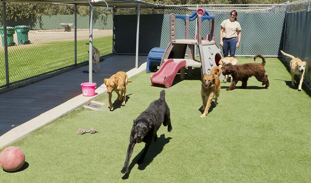 Dog Boarding San Diego Reviews