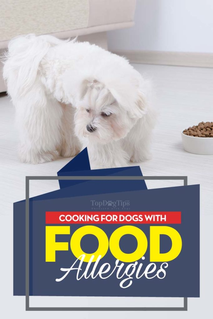 The Guide on How to Feed Dogs With Food Allergies and Food Sensitivities