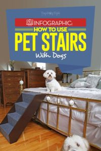 The Guide on How to Train Dogs to Use Pet Stairs and Ramps
