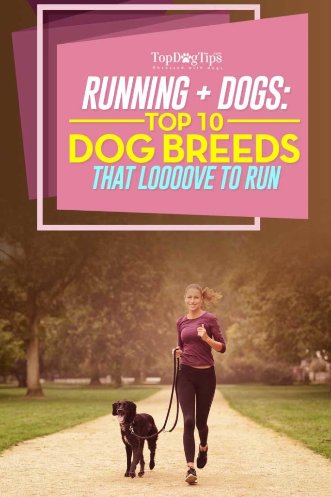 10 Dogs That Love to Run
