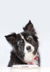 7 Ways to Slim Down Your Senior Dog