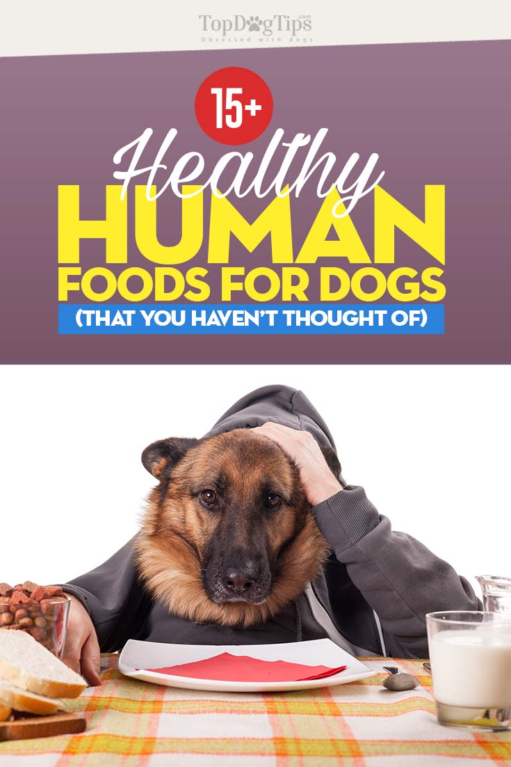 Best Human Foods for Dogs