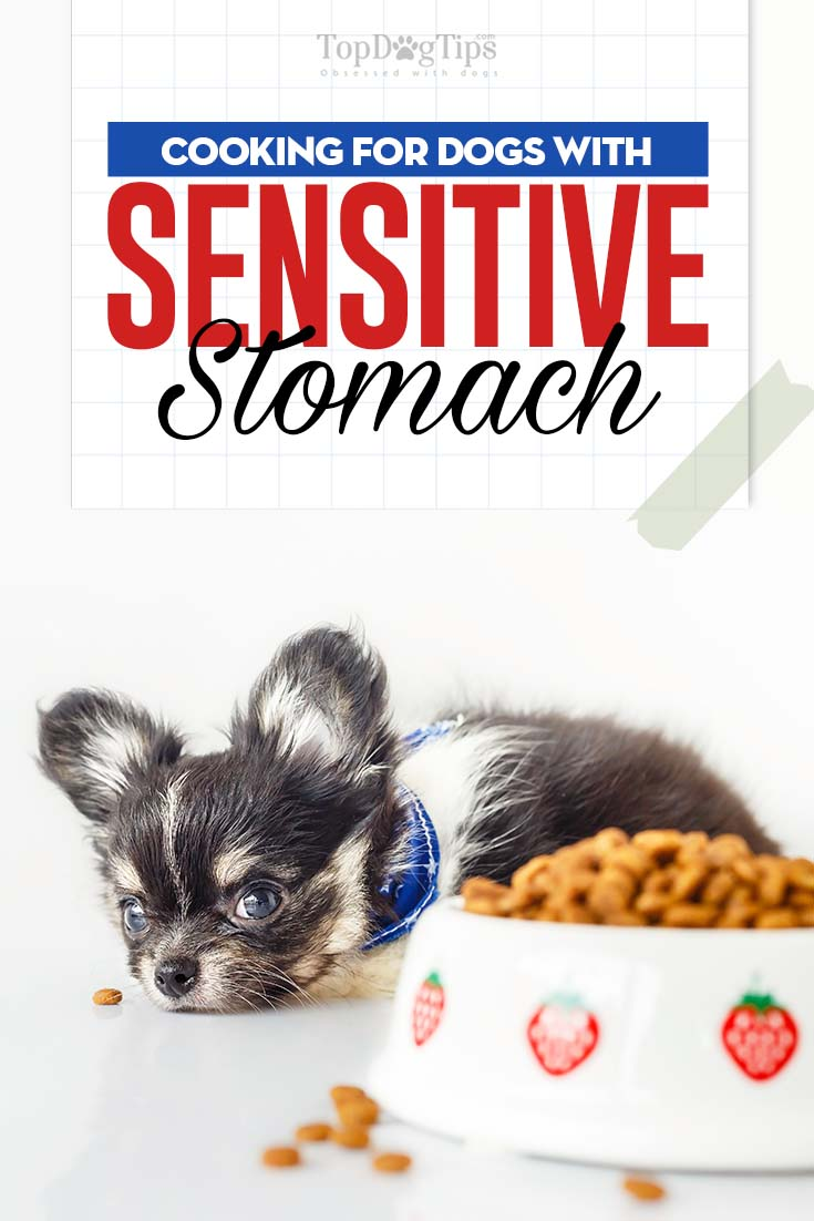 Dietary Guidelines For Dogs With Sensitive Stomachs Top Dog Tips