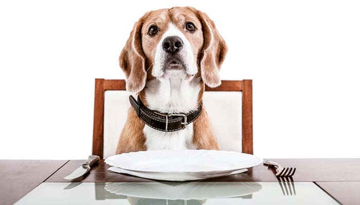 Structuring Your Dog's Diet