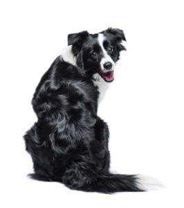 Teach Hyperactive Dogs New Tricks