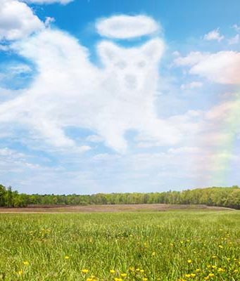 The Rainbow Bridge - What to Do When Your Dog Dies