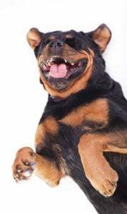 Understanding dog sounds