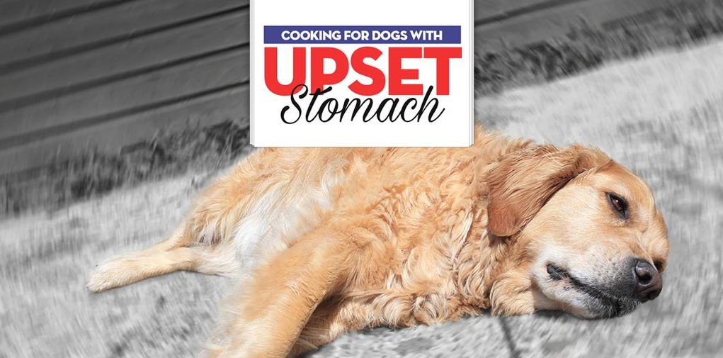 What to Feed a Dog With an Upset Stomach