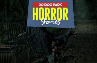 20 Dog Park Horror Stories