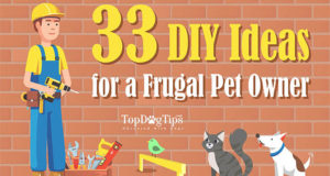 33 DIY Ideas for a Frugal Pet Owner
