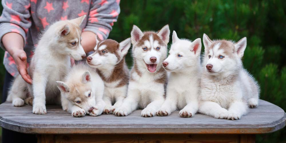 40 Reputable Dog Breeders in the United States