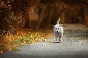 A Neighbor Dog