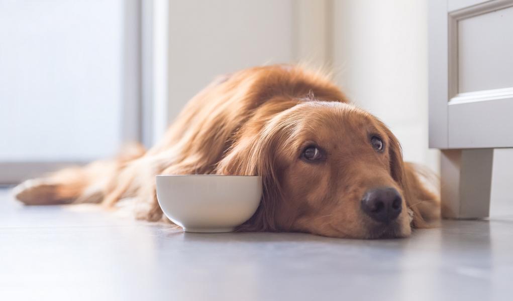 Vets Brand Dog Food