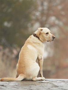 Dog Autism Symptoms
