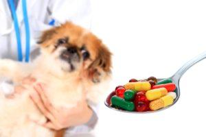 The Best Homemade Dog Food Recipe Veterinary