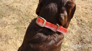 Dublin Dog No Stink Dog Collar