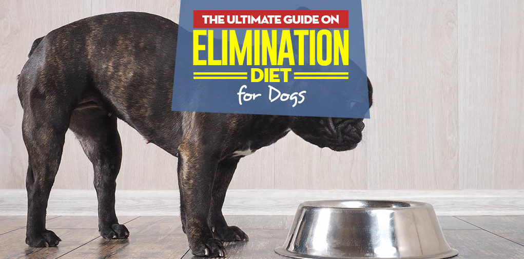 Elimination Diet Trial - The Ultimate Science-based Guide