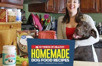 Most Popular Homemade Dog Food Recipe Videos