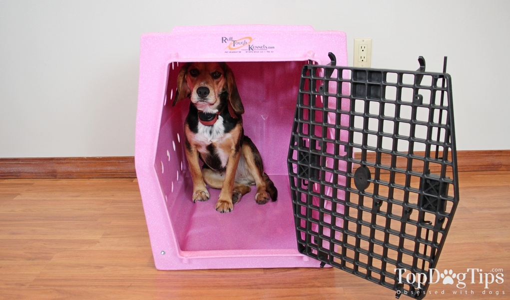 Ruff Tough Kennels >> Review Ruff Tough Kennels Intermediate Single Door Dog