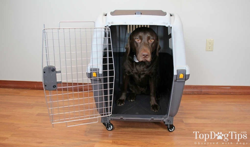 Skudo Dog Carrier Review