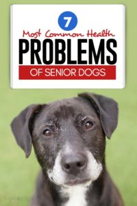 The 7 Most Common Health Problems of Senior Dogs