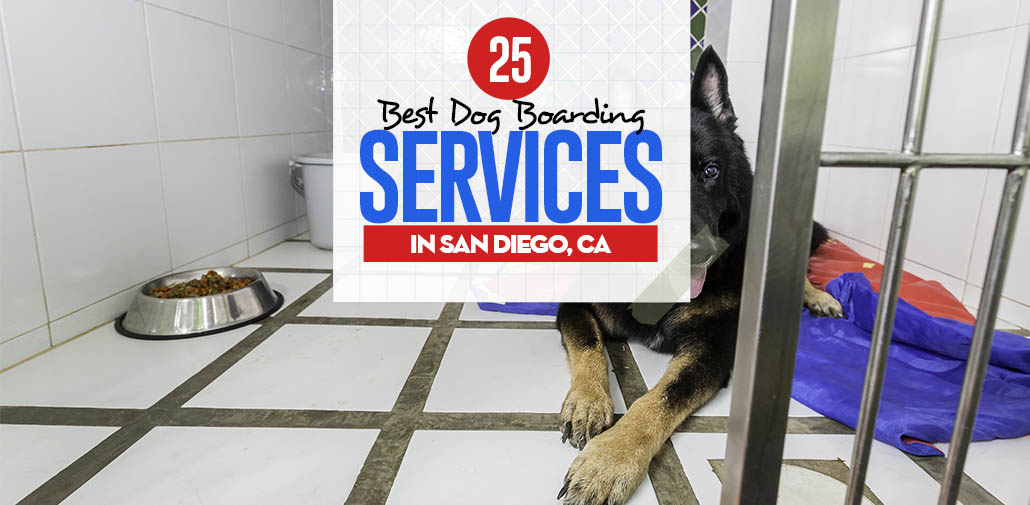The 25 best dog boarding san diego ca services and facilities top 25 best dog boarding services in san diego solutioingenieria Choice Image