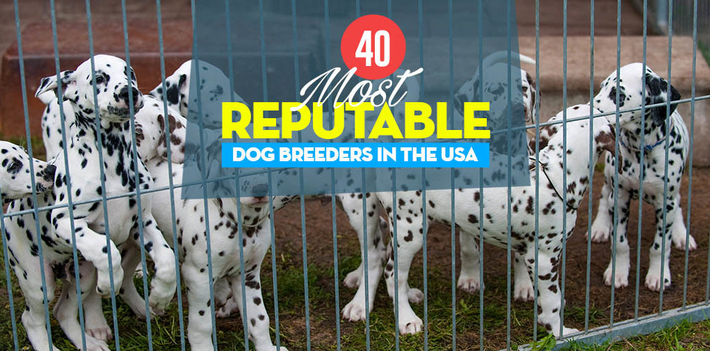 40 Reputable Dog Breeders in the USA of 2019 (AKC Recognized)