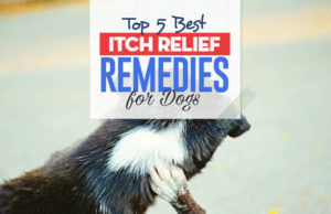 Top 5 Best Itch Relief Treatments for Dogs