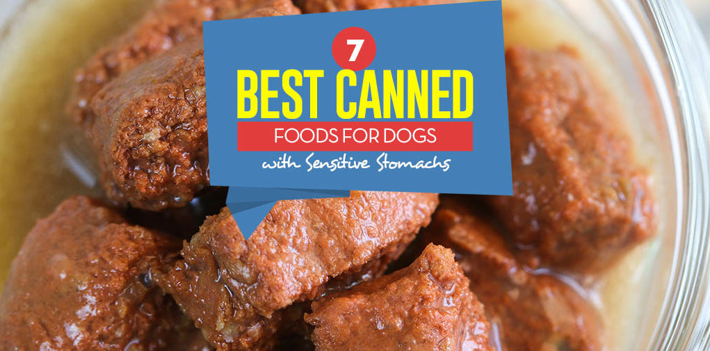 Top 7 Best Canned Dog Food For Sensitive Stomach 2018 Review