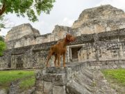 We Now Know What Mayas Used to Do With Dogs Over 2,500 Years Ago