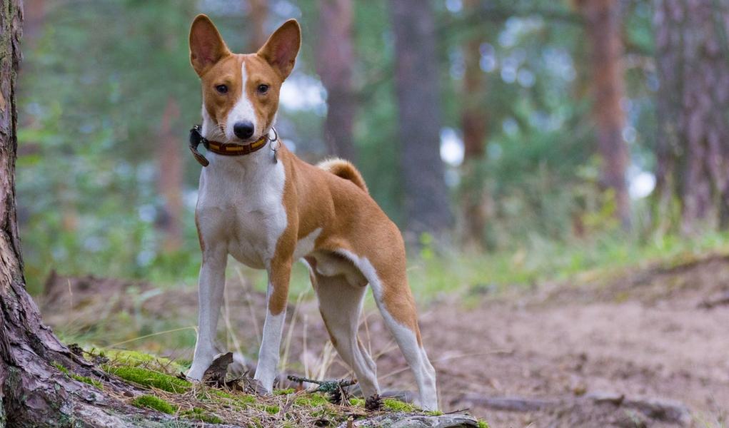 25 Escape Artist Dog Breeds