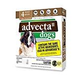 Advecta II Flea Treatment