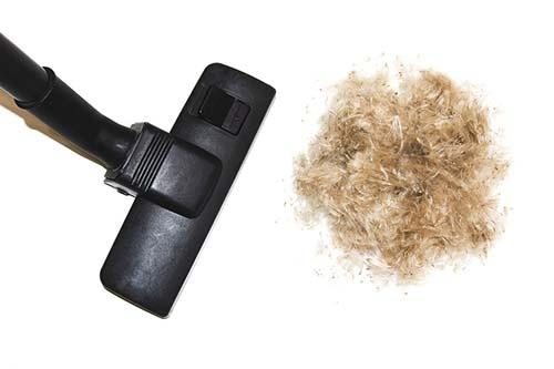 top 30 best vacuums for dog hair daniels tasty pet foodschoosing the best vacuum for dog hair at home