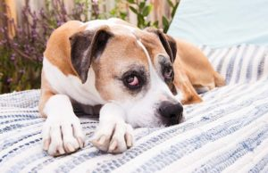Incontinence in Senior Dogs - What You Can Do