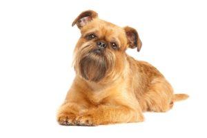 Smallest Dog Breeds