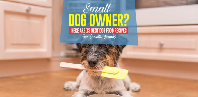 The 13 Homemade Dog Food Recipes for Small Dogs