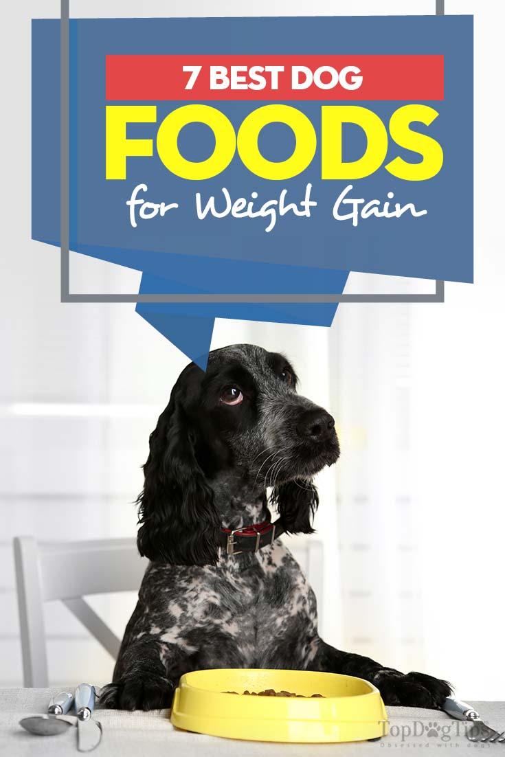 Best Dog Food To Help Gain Weight