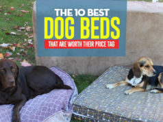 The Best Dog Bed of 2018