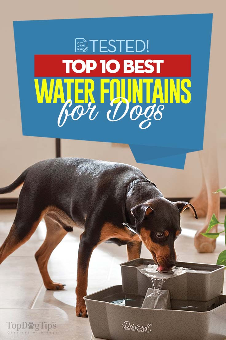 Top 10 Best Dog Water Fountains For Outdoors And Indoors