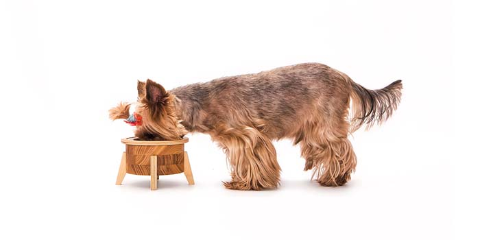 The Best Homemade Dog Food Recipes for Small Dogs