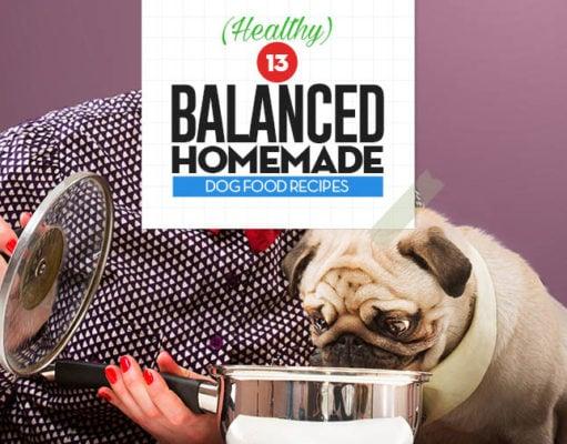 Top 13 Balanced Homemade Dog Food Recipes
