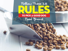 Top 28 Rules to Follow for Picking a Good Dog Food Brands