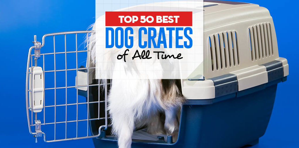 Top 50 Best Dog Crates