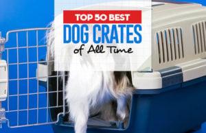 Top 50 Best Dog Crates