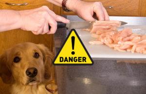 8 Potential Dangers of DIY Homemade Dog Food