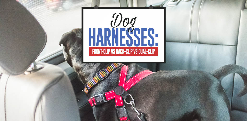 All Types of Dog Harnesses Compared